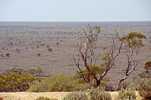 220px-Nullabor_Plain_With_Trees