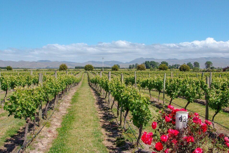 vineyard-4081322_1280